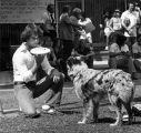 Student Playing Frisbee with Dog, 1979